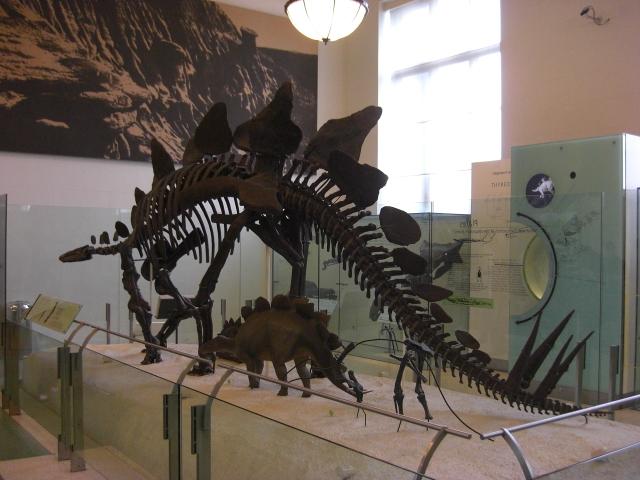 Stegosaurus American Museum Of Natural History