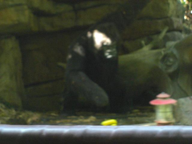 Gorilla jungle cruise