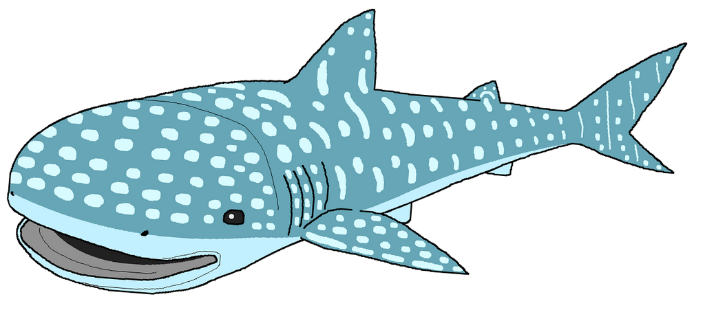 how to draw cartoon whale shark finding dory