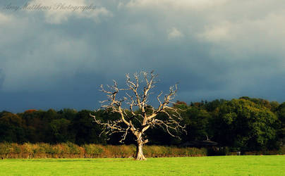 The Lone Tree by Amylnm