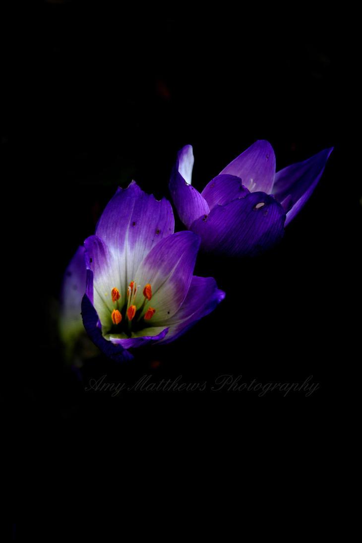 Pictures Of Dark Violet Flowers Kidskunstfo