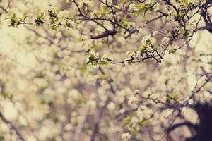 Spring Haze by FairyAngelPrincess