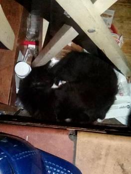 Two Black Cats Sleeping