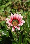 Greece Flower