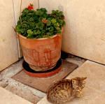 catpot