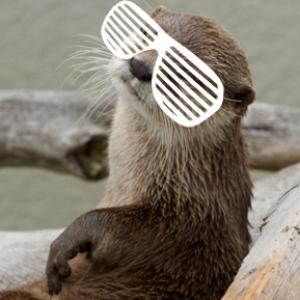boomerangmouth's Profile Picture