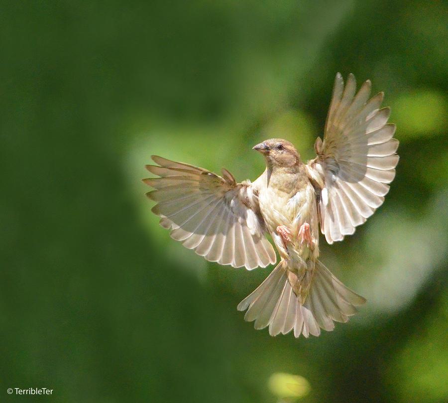Wings of Wonder by TerribleTer
