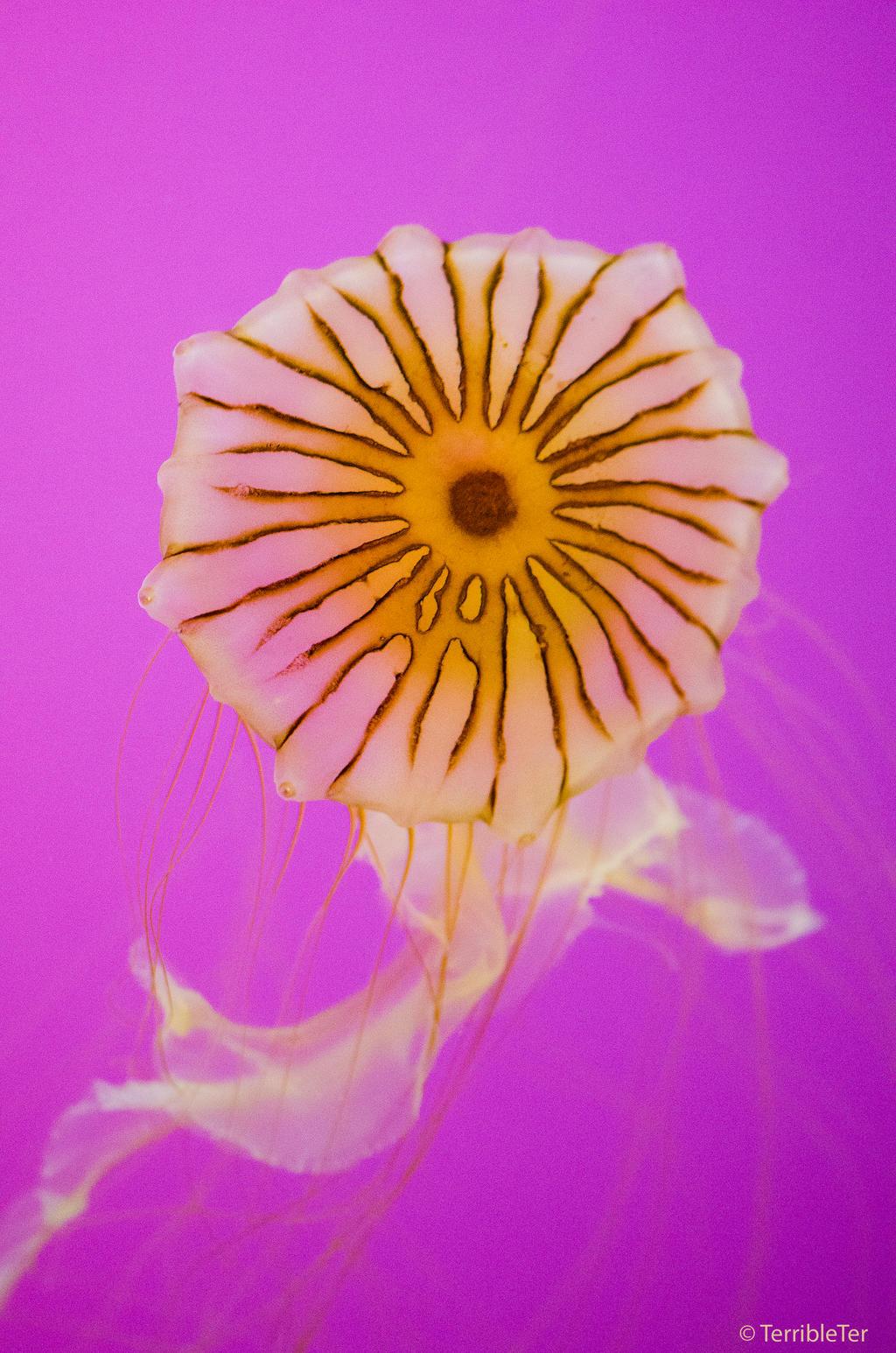 Jellyfish Flower by TerribleTer