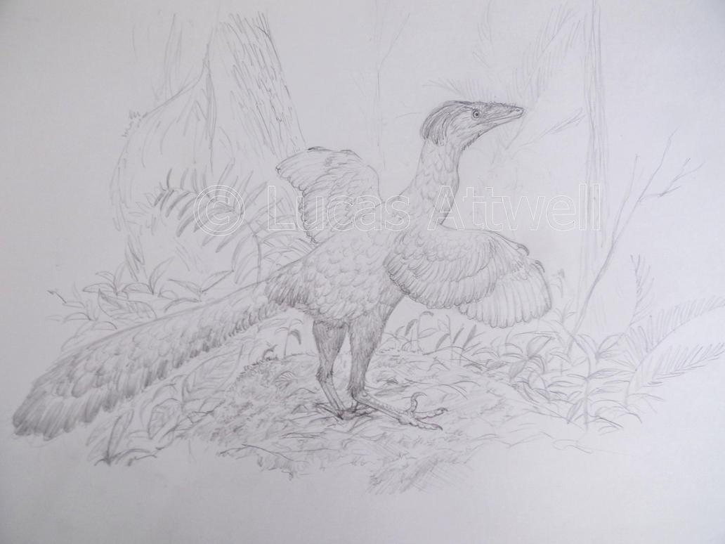 Sinovenator by Lucas-Attwell