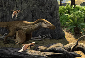 Velociraptor and Gobipteryx