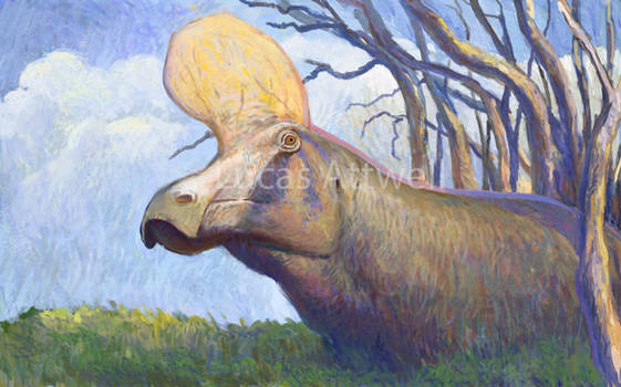 Lambeosaurus magnicristatus