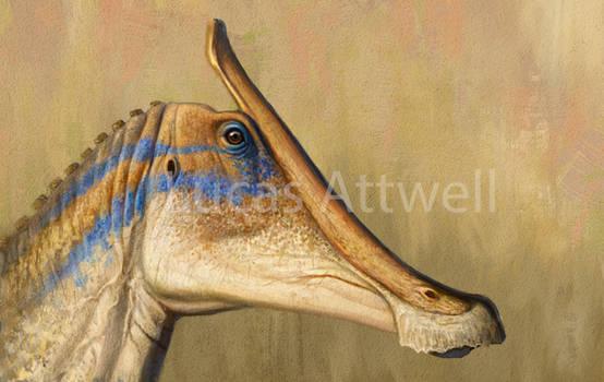 Saurolophus angustirostris
