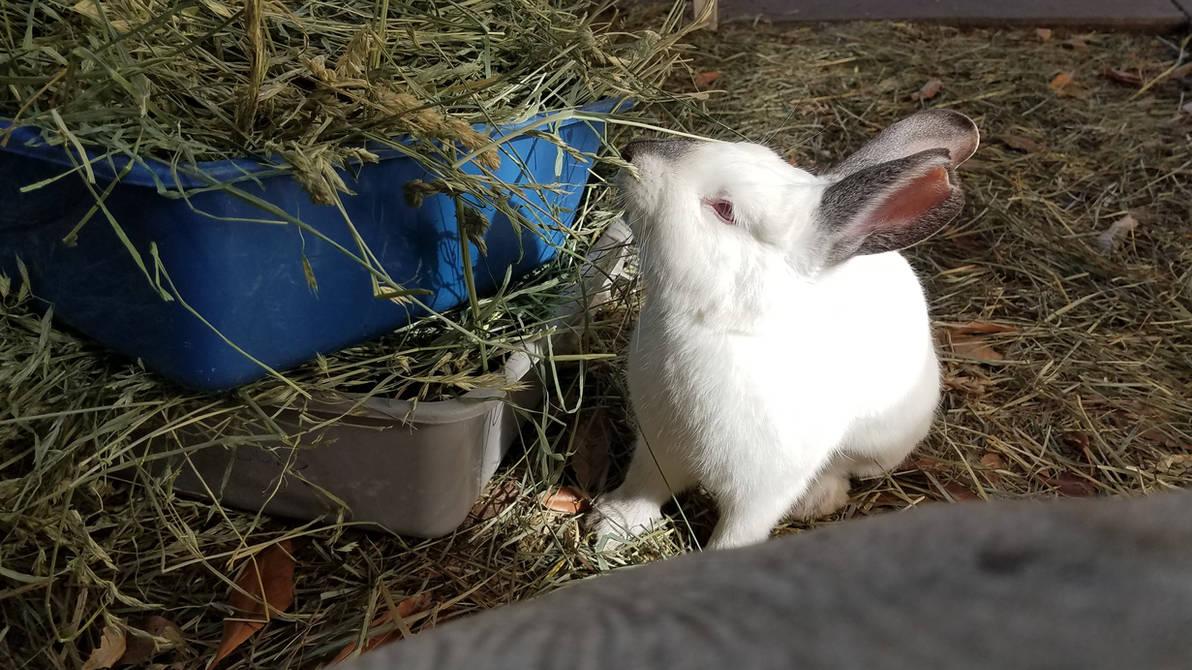 Delicious Hay by endergirl105