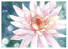 watercolor by hikaSATORU