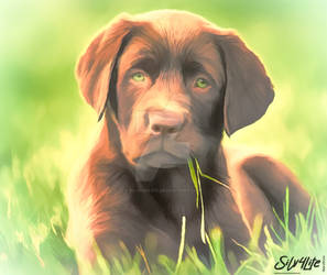 Dog on Field - Paint