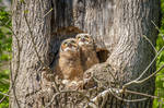 Owlets See Their First Airplane