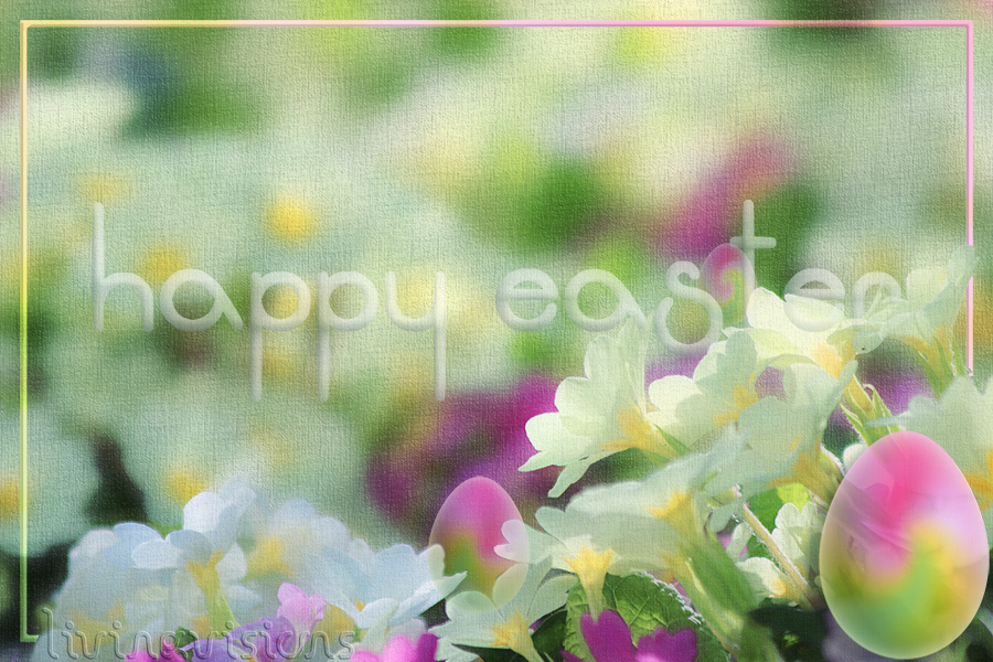 PRIMULAS 0551 20150410 EASTER 2016 900 b by Livingvisions