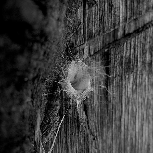 Tunel Web by franlaurel