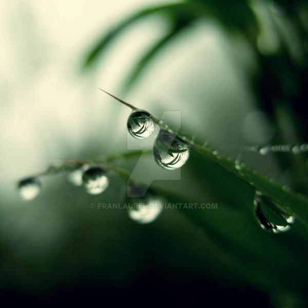 Grass Pearls by franlaurel