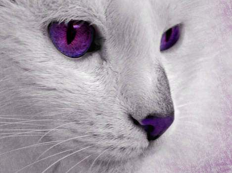 Mystery's Cat