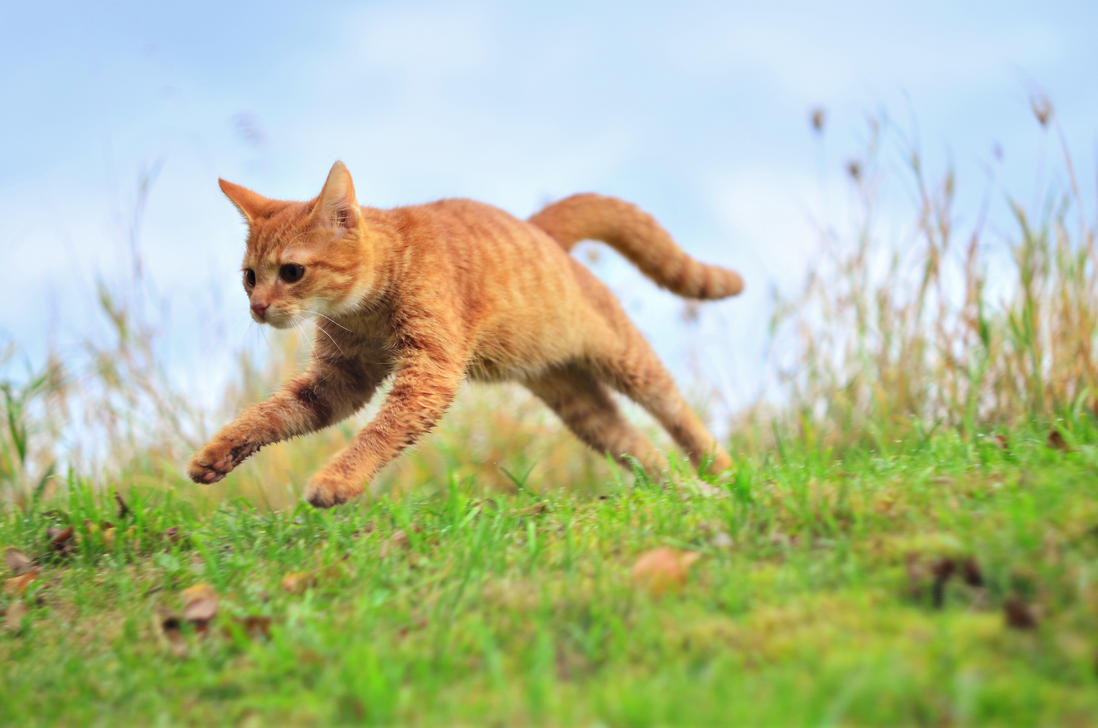 What Makes Cats Vomit Their Food