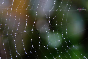Water Droplets on Web by AppleLily