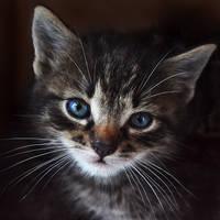 The village kittens VIII by misscreave