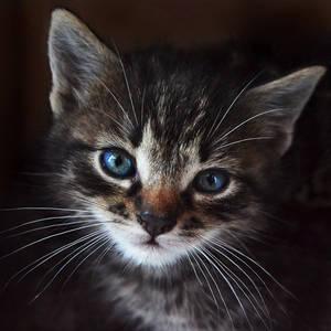The village kittens VIII