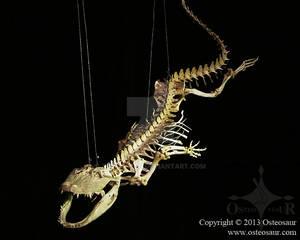 Swimming Alligator Skeleton
