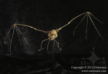 Bat Skeleton by ToddGreen