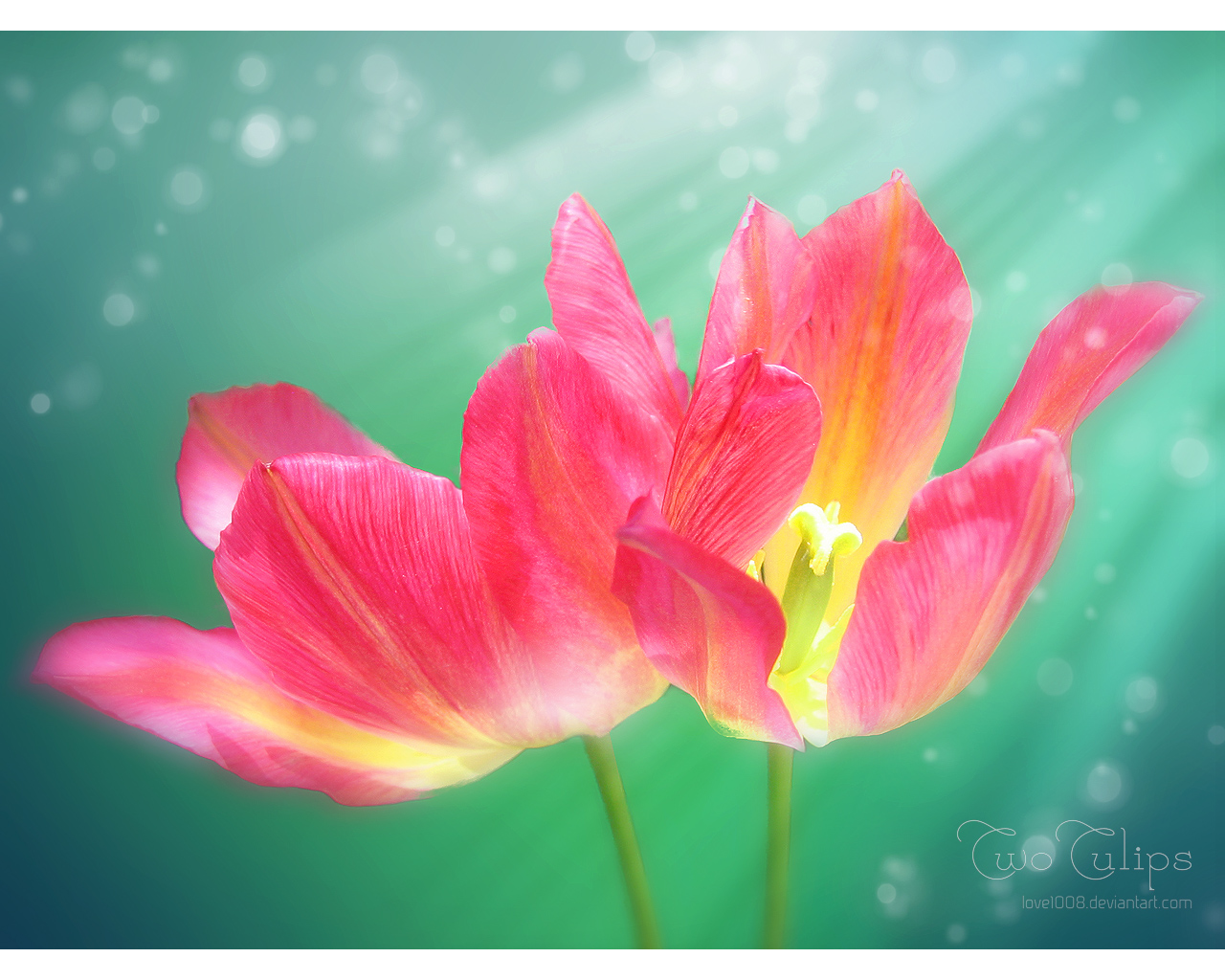2TULIPS by love1008