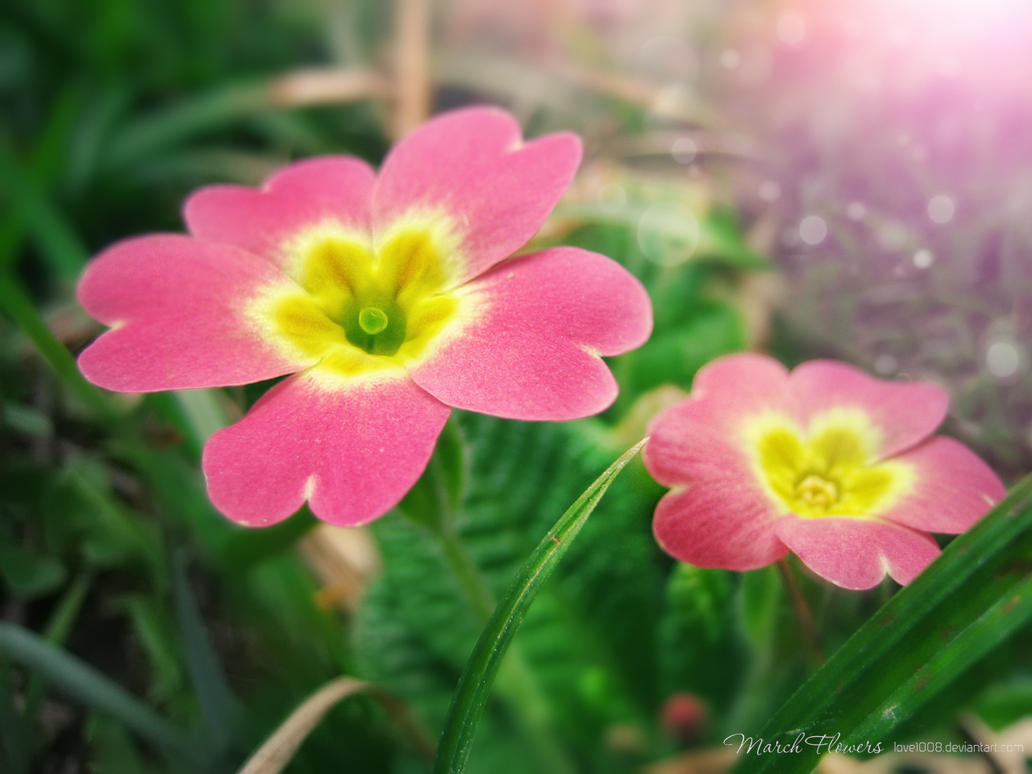 March Flowers 8 by love1008 on DeviantArt