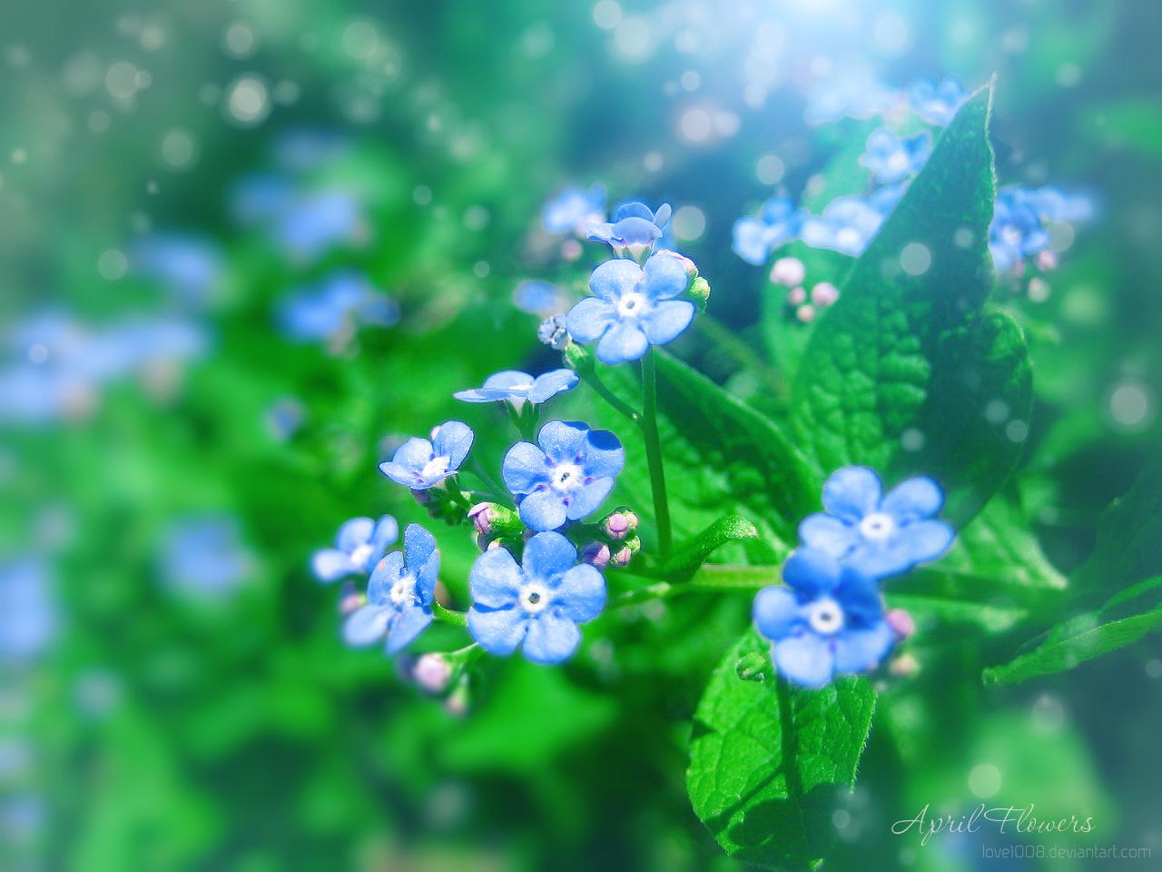 April Flowers 6 By Love1008 On Deviantart