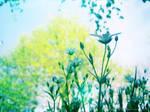 April Flowers 13