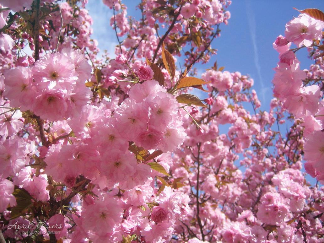 April Flowers Net Worth