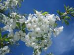 April Flowers 19