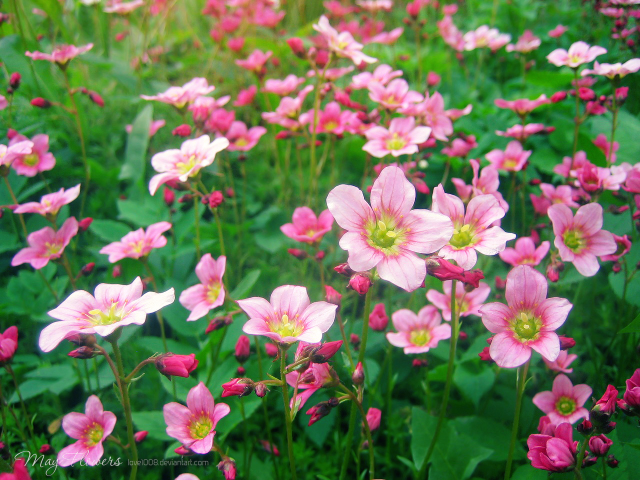 May Flowers 1 by love1008 on DeviantArt