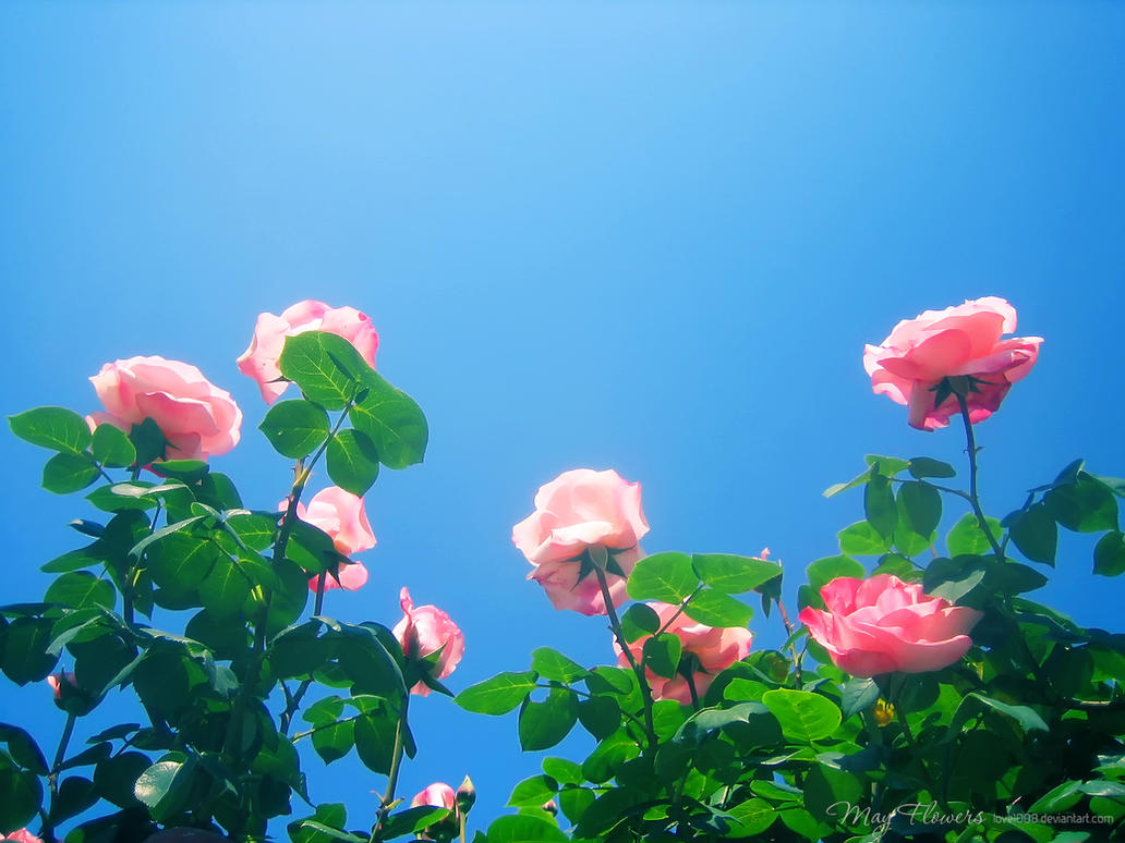 May Flowers 12 by love1008 on DeviantArt