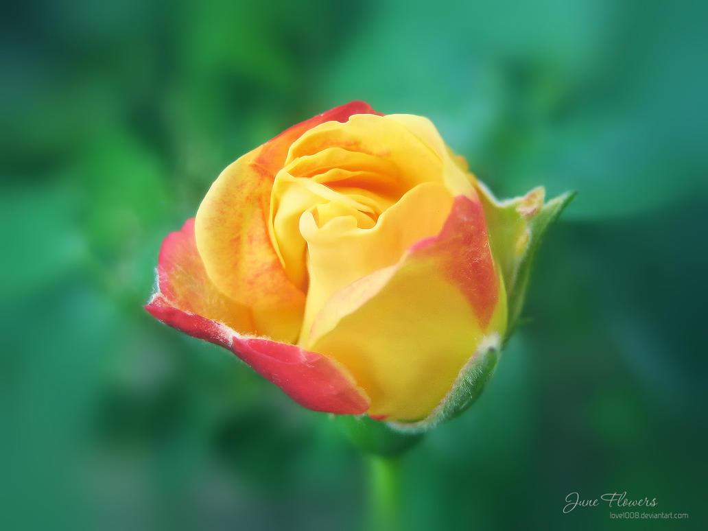 June Flowers 6 by love1008 on DeviantArt