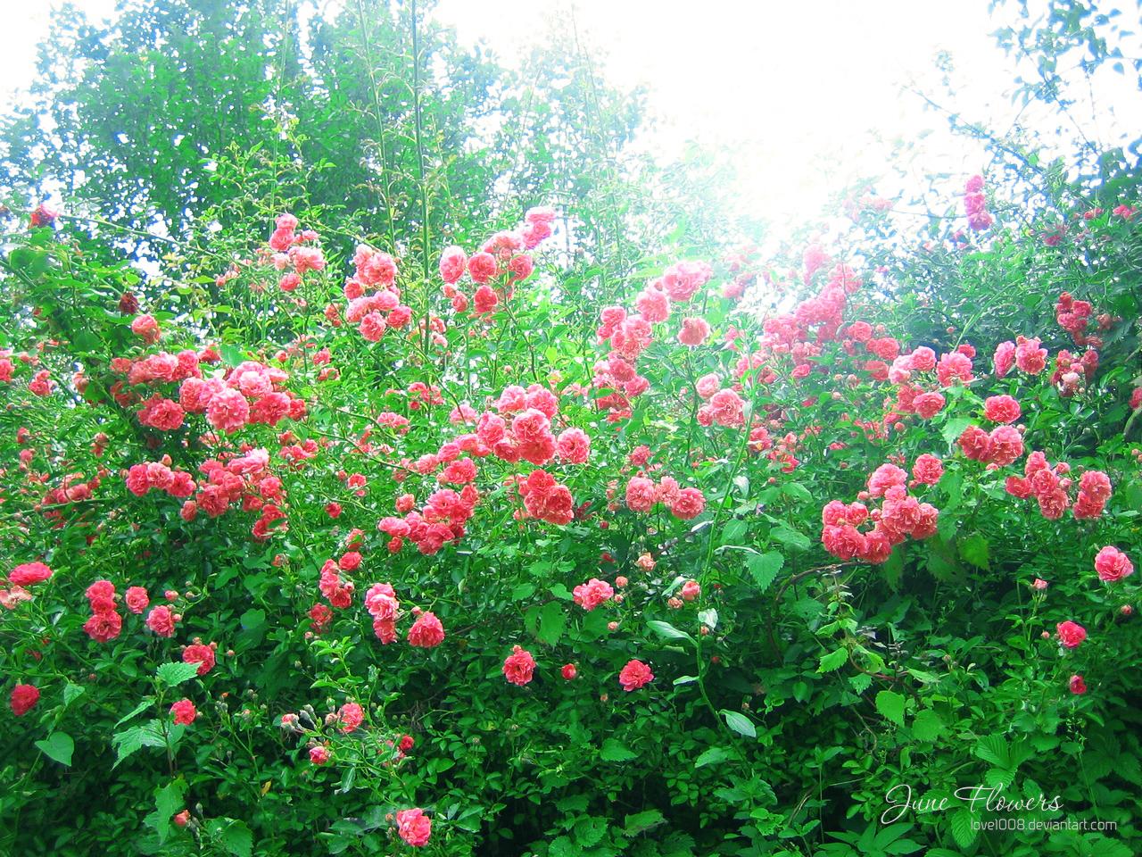 June Flowers 14 by love1008 on DeviantArt