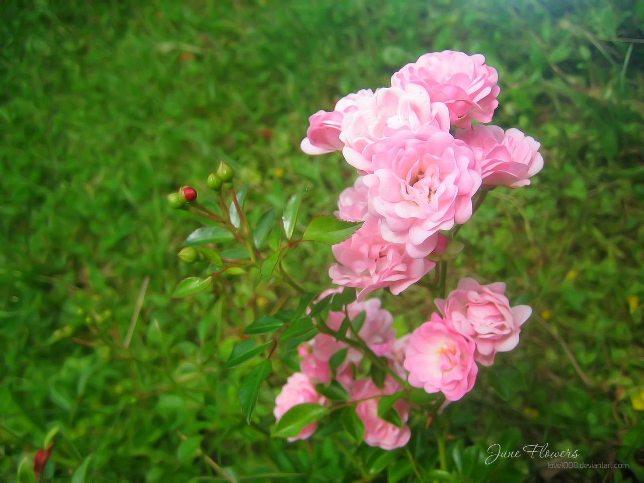June Flowers 16 by love1008 on deviantART