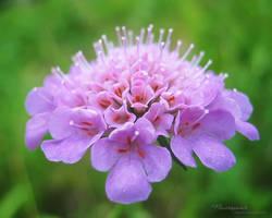 Flowersummer 27 by love1008