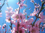 Springness 7