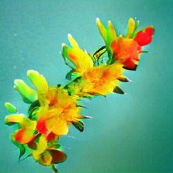 Bloom 23