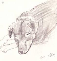 Ekki Dog - Sketch 1 by PoizonMyst