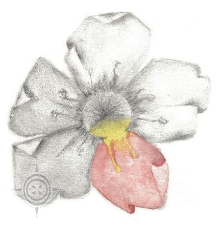 Flower by PoizonMyst