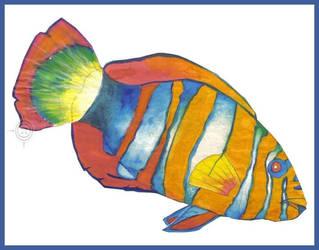 Harlequin Tuskfish by PoizonMyst
