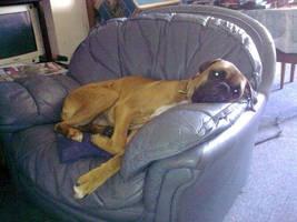 Duke In Chair by stumpy666davies