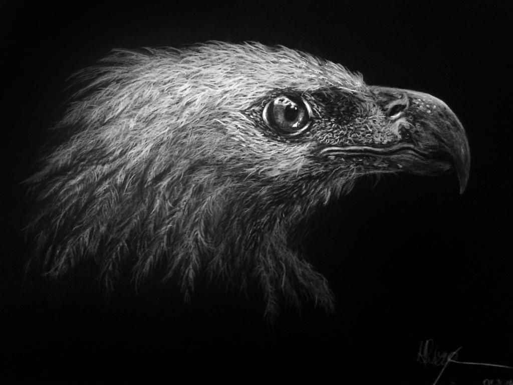 Eagle by Malenarosa