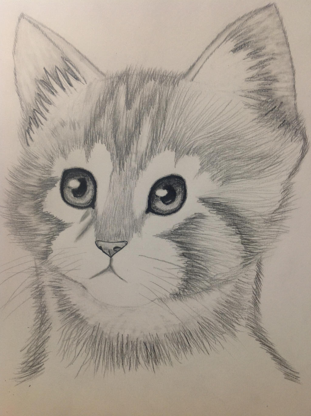 Kitten Pencil Drawing By Bbbcomiclover1 On DeviantArt